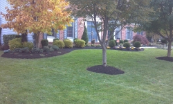 landscaping-11